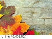 Купить «Разноцветные кленовые листья не фоне деревянных досок», фото № 6408824, снято 16 сентября 2014 г. (c) Мастепанов Павел / Фотобанк Лори