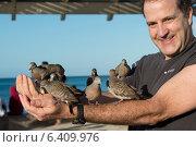 Купить «Man feeding pigeons on his arm, Waikiki, Diamond Head, Kapahulu, Honolulu, Oahu, Hawaii, USA», фото № 6409976, снято 5 февраля 2013 г. (c) Ingram Publishing / Фотобанк Лори