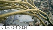 Купить «Underwater view of fishes on coral, Utila, Bay Islands, Honduras», фото № 6410224, снято 30 декабря 2012 г. (c) Ingram Publishing / Фотобанк Лори