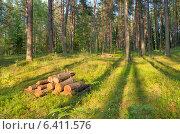 Купить «В хвойном лесу», фото № 6411576, снято 5 июля 2014 г. (c) Икан Леонид / Фотобанк Лори