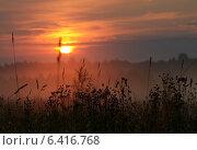 Трава и туман в свете восходящего солнца. Стоковое фото, фотограф Анфимов Леонид / Фотобанк Лори