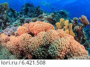Морская жизнь в Красном море. Стоковое фото, фотограф Станислав Мороз / Фотобанк Лори