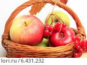 Купить «Яблоки в корзине и ягоды красной калины», эксклюзивное фото № 6431232, снято 23 сентября 2014 г. (c) Яна Королёва / Фотобанк Лори