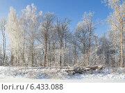 Купить «Зимний пейзаж в ясный морозный день», эксклюзивное фото № 6433088, снято 22 января 2014 г. (c) Елена Коромыслова / Фотобанк Лори