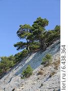 Купить «Зеленые сосны на горном склоне на фоне голубого неба», фото № 6438364, снято 23 августа 2014 г. (c) Емельянов Валерий / Фотобанк Лори