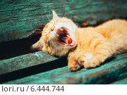 Купить «Рыжий котёнок зевает на зелёной скамейке в парке», фото № 6444744, снято 5 июня 2014 г. (c) g.bruev / Фотобанк Лори