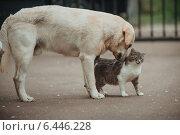 Собака нюхает кошку. Стоковое фото, фотограф Виктор Водолазький / Фотобанк Лори