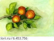 """Купить «Натюрморт """"Апельсины на ветке"""", акварель», иллюстрация № 6453756 (c) Ирина Иванова / Фотобанк Лори"""