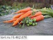 Морковь на фоне сельхозугодий с зелеными помидорами на ветке. Стоковое фото, фотограф Иван Корчагин / Фотобанк Лори