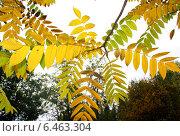 Осень, осенние листья. Стоковое фото, фотограф Чулпан Нигметзянова / Фотобанк Лори