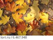 Листья клена лежат на земле. Стоковое фото, фотограф Buyanka / Фотобанк Лори