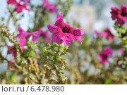 Фиолетовый цветок. Стоковое фото, фотограф Роман Палтахиенти / Фотобанк Лори