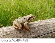 Купить «Травяная лягушка на бревне», фото № 6494488, снято 18 июля 2014 г. (c) Николай Белецкий / Фотобанк Лори