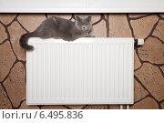 Купить «Любимое место кошки», фото № 6495836, снято 6 октября 2014 г. (c) Светлана Чуйкова / Фотобанк Лори