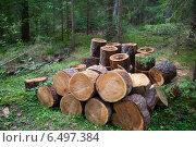 Купить «Части стволов больных хвойных деревьев», фото № 6497384, снято 21 августа 2014 г. (c) Родион Власов / Фотобанк Лори