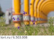 Полевые цветы на фоне газовых труб промышленного объекта. Стоковое фото, фотограф Эдуард Данилов / Фотобанк Лори