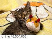 Серый котенок спит обняв мягкую игрушку. Стоковое фото, фотограф Владимир Ходатаев / Фотобанк Лори