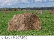 Купить «Сельский пейзаж: стог сена в поле», эксклюзивное фото № 6507916, снято 13 августа 2014 г. (c) А. А. Пирагис / Фотобанк Лори