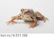 Лягушка на сером фоне. Стоковое фото, фотограф Alexey Kizenkov / Фотобанк Лори