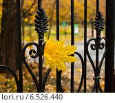 Купить «Ограждение Ботанического сада», фото № 6526440, снято 12 октября 2014 г. (c) Василий Аксюченко / Фотобанк Лори