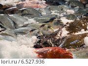 Купить «fish on spanish market counter», фото № 6527936, снято 19 января 2019 г. (c) Яков Филимонов / Фотобанк Лори