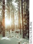 Лес в южной Савонлине, Финляндия (2014 год). Стоковое фото, фотограф Андрей Гашев / Фотобанк Лори