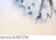 Невесомые капли. Стоковое фото, фотограф Виктория Кузьменко / Фотобанк Лори