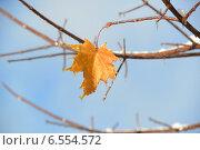 Купить «Одинокий кленовый лист», фото № 6554572, снято 19 октября 2014 г. (c) Андрей Забродин / Фотобанк Лори