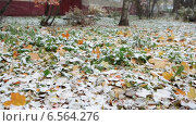 Купить «Опавшие осенние листья на снегу под слоем первого снега», видеоролик № 6564276, снято 20 октября 2014 г. (c) Кекяляйнен Андрей / Фотобанк Лори