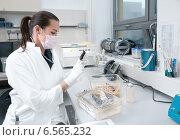 Женщина ученый работает с лабораторными мышами. Стоковое фото, фотограф Аnna Ivanova / Фотобанк Лори
