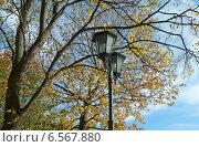 Купить «Осенние деревья  и уличный фонарь», эксклюзивное фото № 6567880, снято 19 октября 2014 г. (c) Svet / Фотобанк Лори