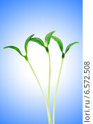 Купить «Green seedlings isolated on the white», фото № 6572508, снято 14 марта 2011 г. (c) Elnur / Фотобанк Лори