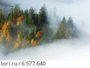 Купить «Туман в Карпатских горах», фото № 6577640, снято 30 апреля 2012 г. (c) Эдуард Кислинский / Фотобанк Лори