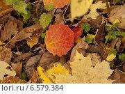 Желтые осенние листья. Стоковое фото, фотограф Dmitry Rumyntsev / Фотобанк Лори