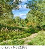 Купить «Осенний пейзаж с тропинкой в лесу», фото № 6582988, снято 26 июля 2019 г. (c) Михаил Марковский / Фотобанк Лори