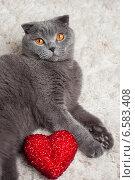 Купить «Красивый британский и сердце», фото № 6583408, снято 16 января 2019 г. (c) Останина Екатерина / Фотобанк Лори