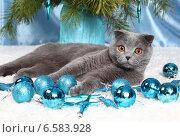 Купить «Красивый британский кот и новогодние игрушки», фото № 6583928, снято 15 декабря 2012 г. (c) Останина Екатерина / Фотобанк Лори