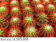 Кактусы в горшках. Стоковое фото, фотограф Винокуров Александр / Фотобанк Лори