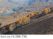 Осенний горный обзор на березовый лес и горную реку. Вид сверху. Северный Кавказ. Россия. Стоковое фото, фотограф Эдуард Сычев / Фотобанк Лори