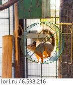 Белка в колесе. Стоковое фото, фотограф Нина Г. / Фотобанк Лори
