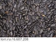 Семена подсолнуха, фон. Стоковое фото, фотограф Андрей Семин / Фотобанк Лори