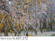 Лес во льду. Стоковое фото, фотограф Александра Андрющенко / Фотобанк Лори