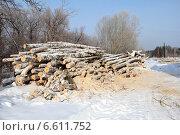 Купить «Спиленные деревья берёзы», фото № 6611752, снято 5 марта 2014 г. (c) Марина Орлова / Фотобанк Лори