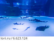 Купить «Скаты в огромном аквариуме», фото № 6623124, снято 19 июня 2014 г. (c) Володина Ольга / Фотобанк Лори