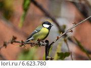 Купить «Большая синица», фото № 6623780, снято 4 ноября 2014 г. (c) Игорь Архипов / Фотобанк Лори