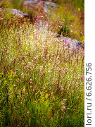 Луговые травы. Стоковое фото, фотограф Инна Остановская / Фотобанк Лори