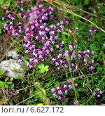 Луговые цветы на фоне. Стоковое фото, фотограф Инна Остановская / Фотобанк Лори