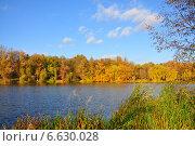 Золотая осень. Стоковое фото, фотограф ВЛАДИМИР КУШПИЛЬ / Фотобанк Лори