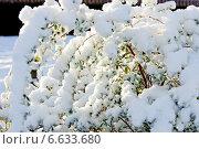 Купить «Зимняя ветка, подсвеченная солнцем», фото № 6633680, снято 7 декабря 2010 г. (c) Татьяна Кахилл / Фотобанк Лори