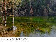 Деревья в воде в озере. Стоковое фото, фотограф Екатерина Ярославовна Мостовая / Фотобанк Лори